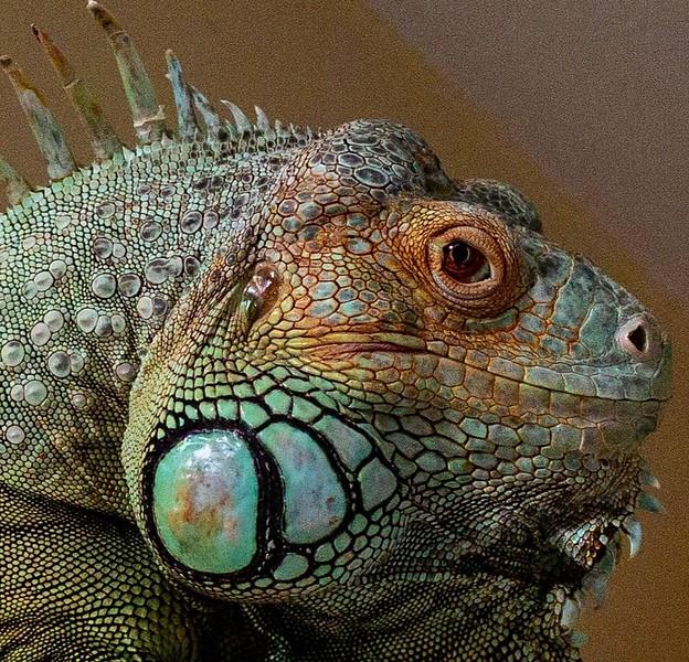 biggie+lizard.jpg