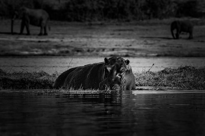 Botswana_June_2017 (5938 of 6179).jpg