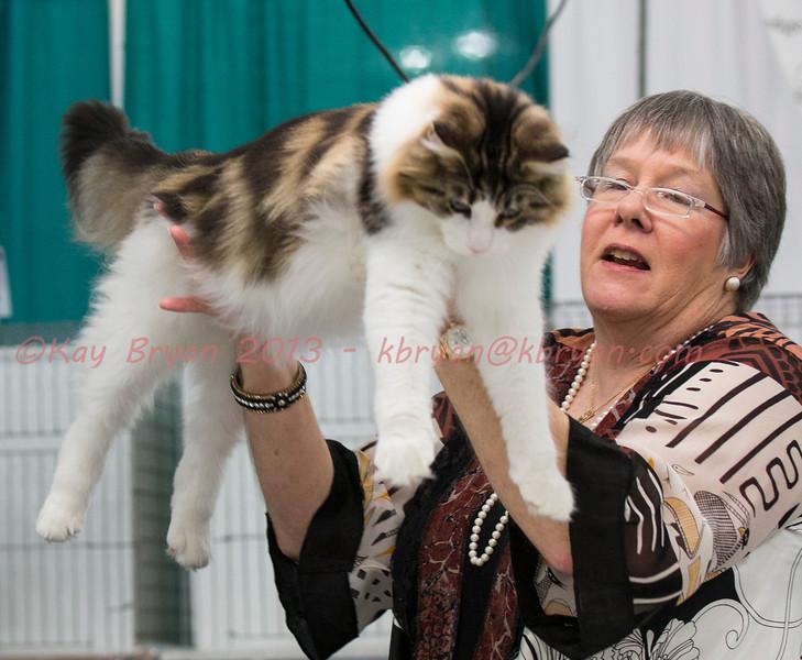 CatShow2014025_1.jpg