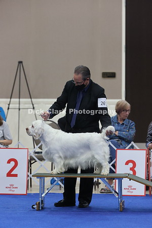 CSCA Regional Specialty Bitches - Bred by Exhibitor