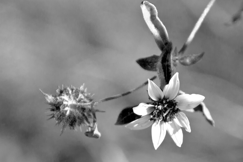 Jan 11: My first-ever attempt at converting a color to a pleasing black and white. (For a photo class I'm taking.)