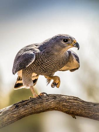 ASDM Birds 3-21-2018b- (1).jpg
