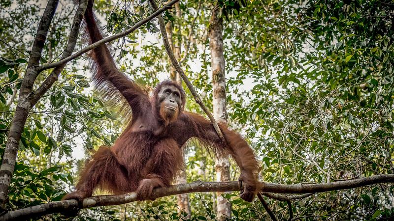 Borneo-2274.jpg