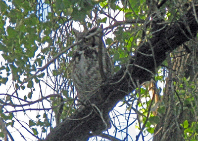 Day 17: Boulder. Twin Lakes and Owl