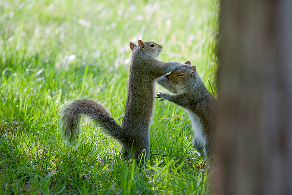 Squirrel interactions