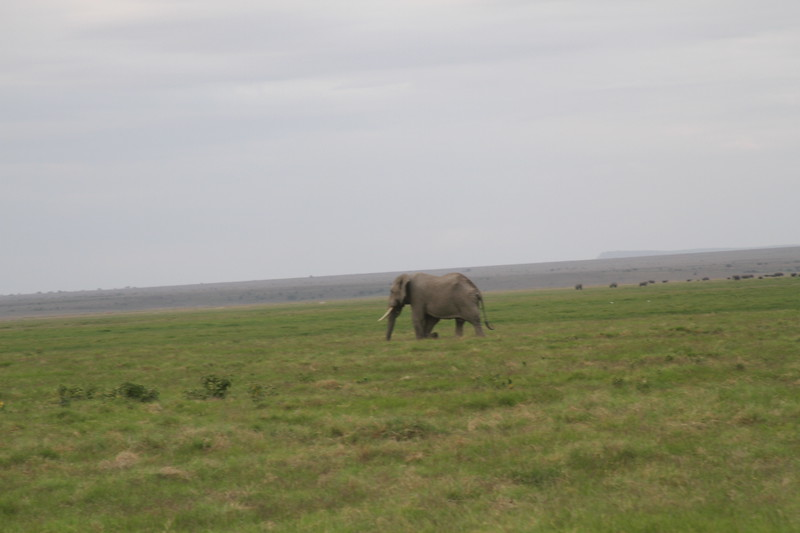 Kenya 2019 #2 1559.JPG