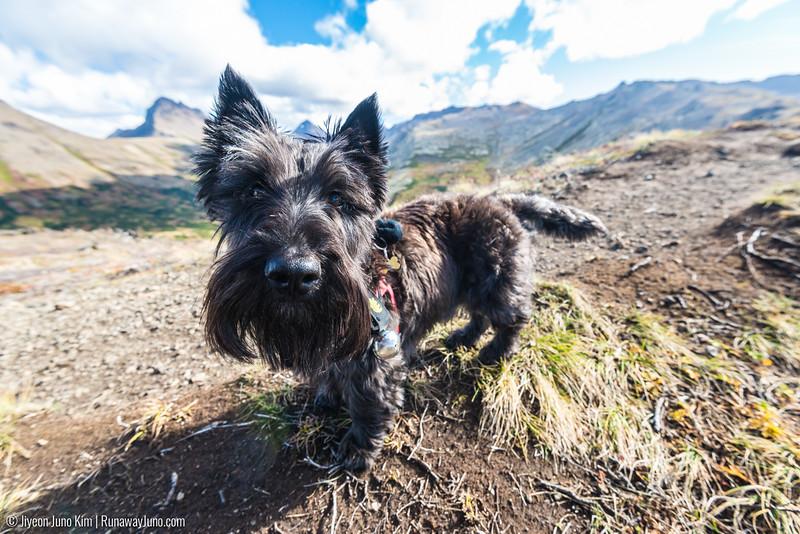 2016.09_Alaska-6103850.jpg