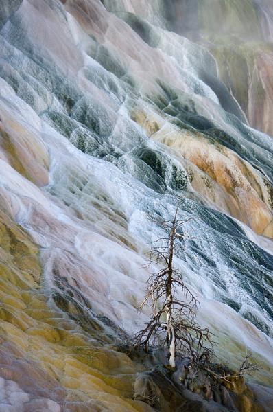 Yellowstone867.jpg