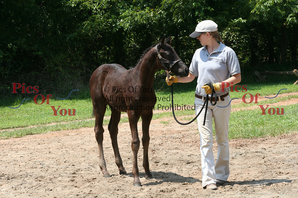 MS Wendolyn Filly