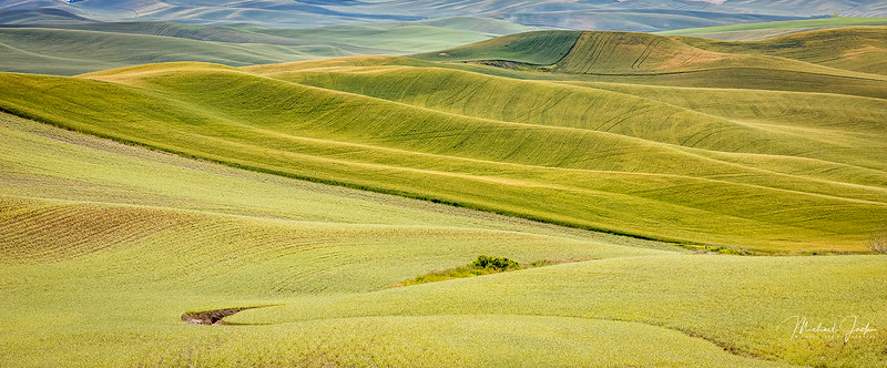 Palouse (2 of 8).JPG