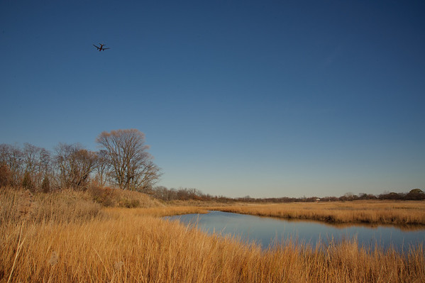 Four Sparrow Marsh