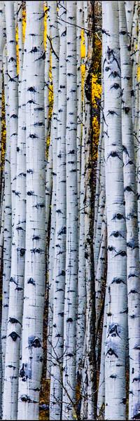 tmophoto_ashcroft trees 2.jpg