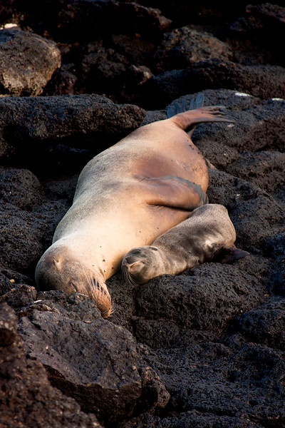 Journey into the Galapagos Day 10