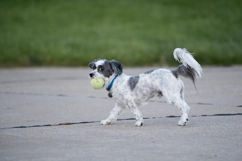 LuLu - Brady - Cooper Play Friends (52 of 109).jpg