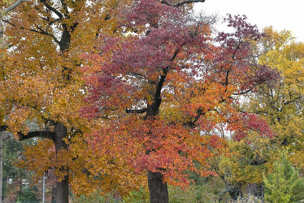 2018-11-03-Bellefountaine Cemetery with fall colors