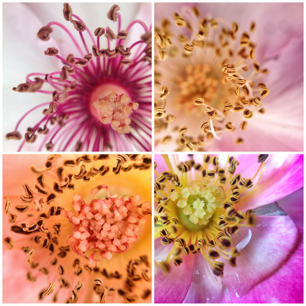 flower_composite