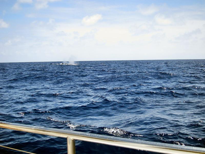 Whale Watching Cruise on Kai Oli Oli along the west coast of Oahu