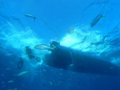 Shark Dives in the Bahamas