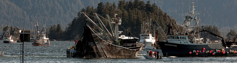 2014 Sitka Herring-4th opening