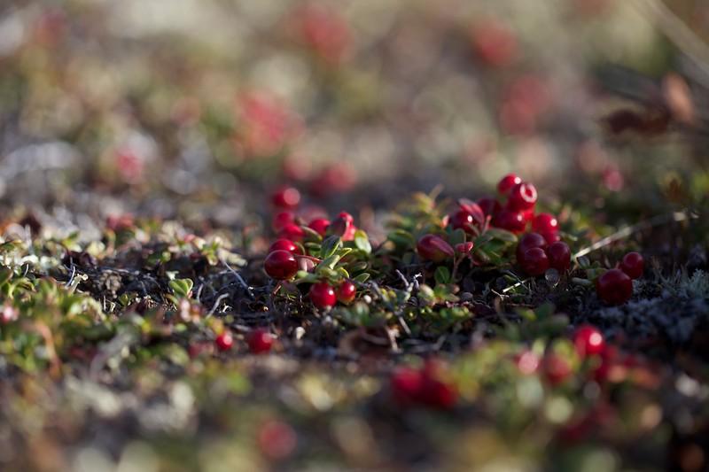 Toolik-Tundra 1729.jpg