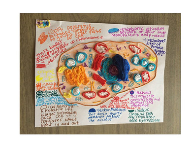 MS 6th Cell Models 4-3-20