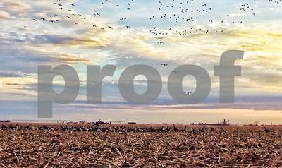 texas-high-plains-a-goose-hunters-paradise