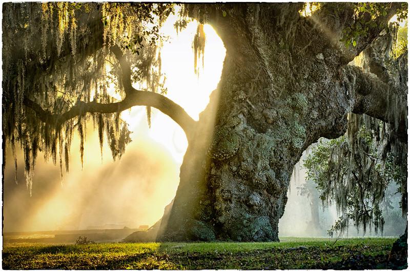 McLeod Plantation, Charleston, SC