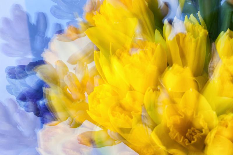daffodils and hyacinths