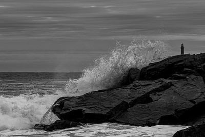 Loblolly Cove - Black and White