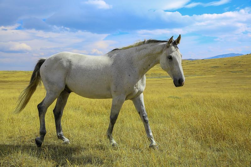 Horses 31.jpg