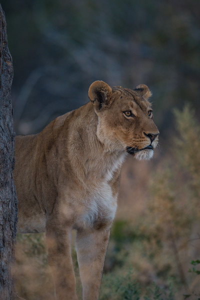 Botswana_June_2017 (5475 of 6179).jpg