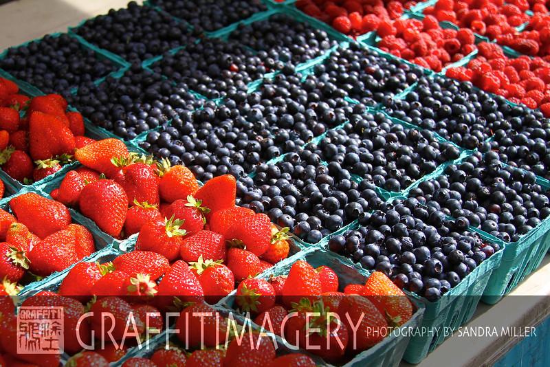 Garden September 2 201034.jpg