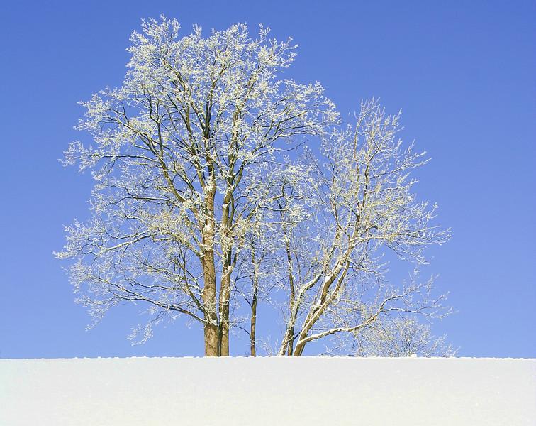 tree 08 .jpg