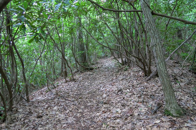 Green Mountain Trail -- 3,600'