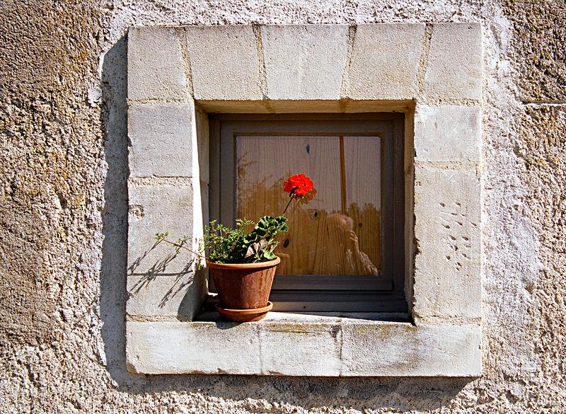 window flower-34.1.jpg
