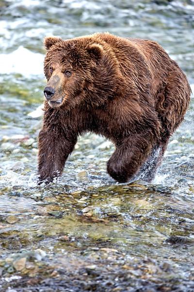 Alaska_2013_FH0T5359.jpg