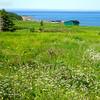 Gros Morne National Park, Newfoundland - 6
