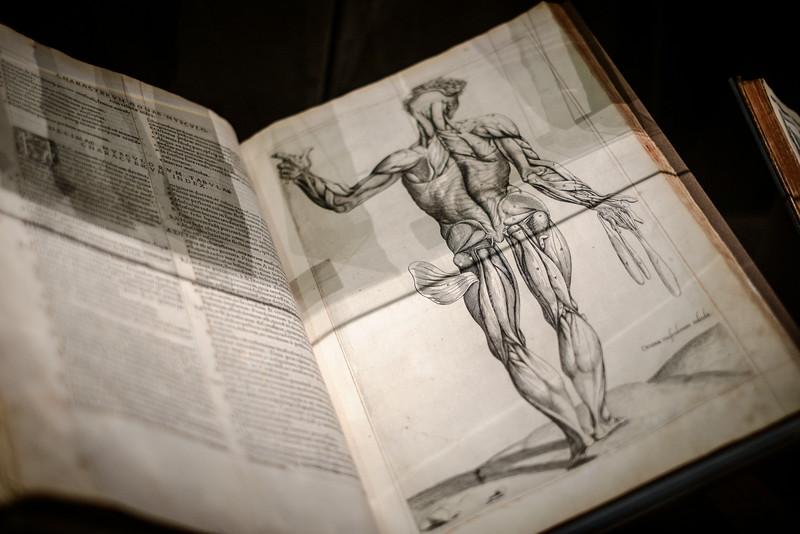 Compendia totius anatomie delineato, 1545