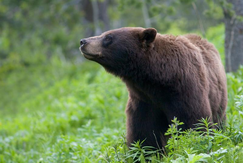 black bear001.jpg