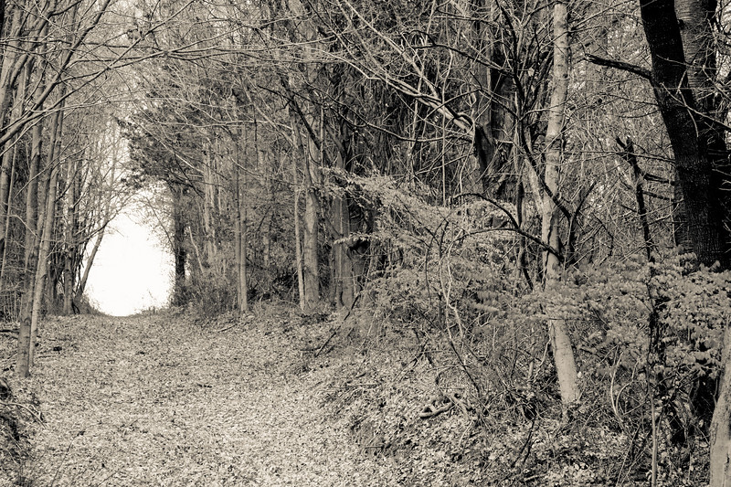 Path in the Woods .jpg