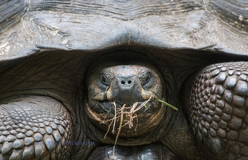 Tortoise close up.jpg