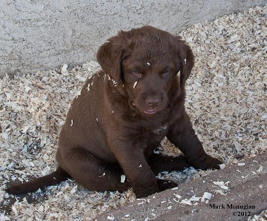Puppy Candids # 2