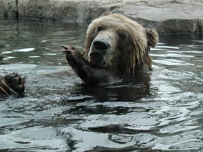 Minnesota 2010 - Game, Zoo and Minneapolis