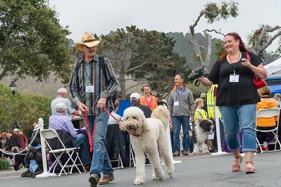 3-standard poodles parade