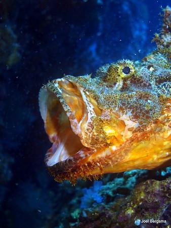 2017-05 Acqua  Dive Resort