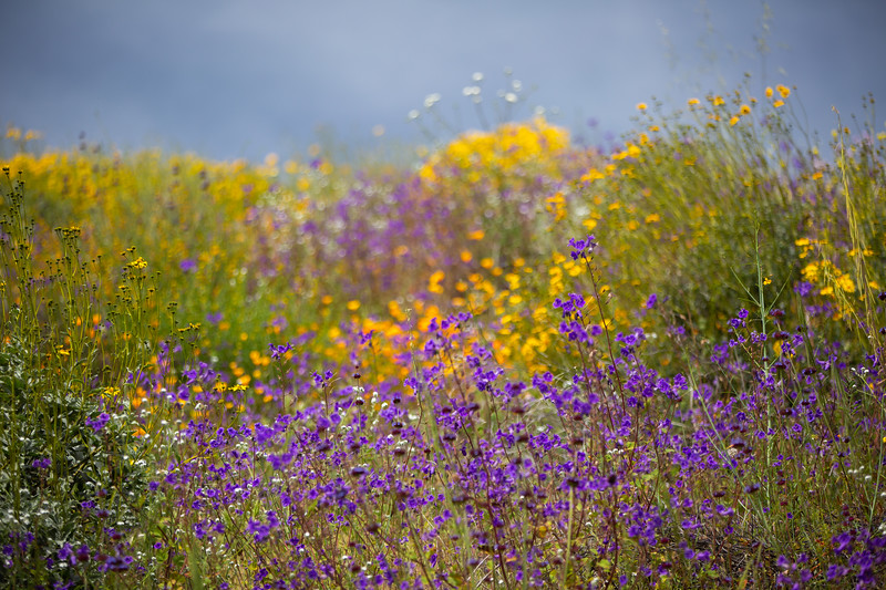 Spring Flowers B-110.jpg