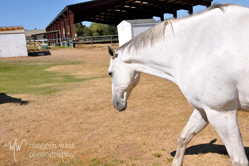 EB&Horses-055.jpg