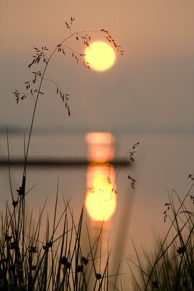 Grässtrå_i_soluppgång.jpg