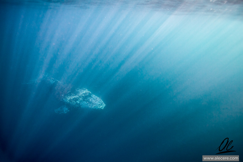 Friendly Humpback
