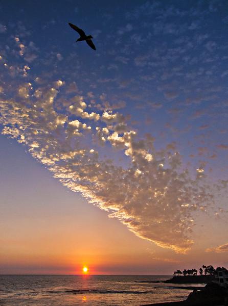 gull over cloud.jpg